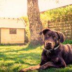 Trucos para conseguir un nombre de perro imponente