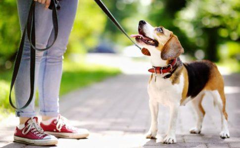 El paseo del perro