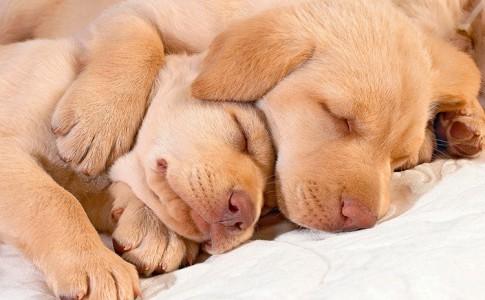 Sueños de perros
