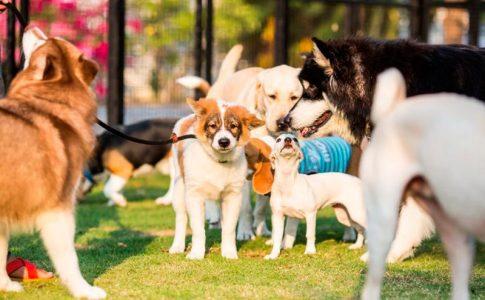 Cuáles son las enfermedades de transmisión sexual más importantes en perros
