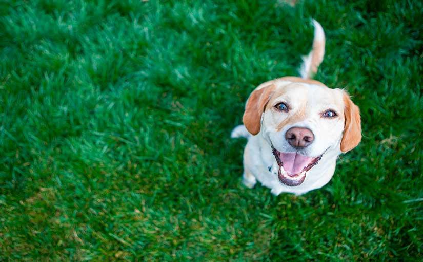 Cosas que nos enseñan los perros