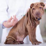 ¿Es mejor vacunar a un perro de cachorro que de adulto?
