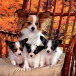 Diarrea tras el parto en perros