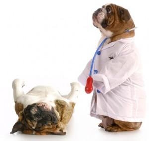 esterilización y castración edades recomendadas