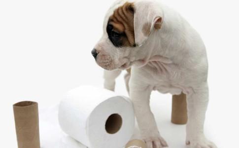 Resultado de imagen para problemas gastrointestinales en perros