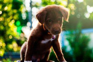Evitar el estreñimiento en perros bebés