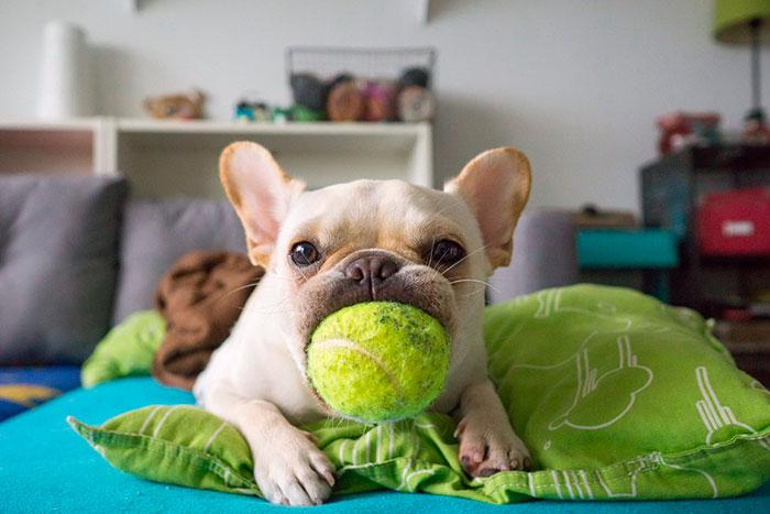 Jugar con el perro miedoso