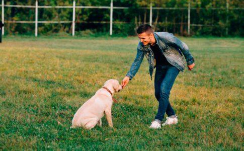 Cómo entrenar a un perro para la defensa y ataque