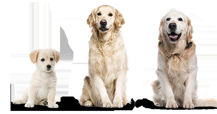 Crecimiento y tamaño de perros