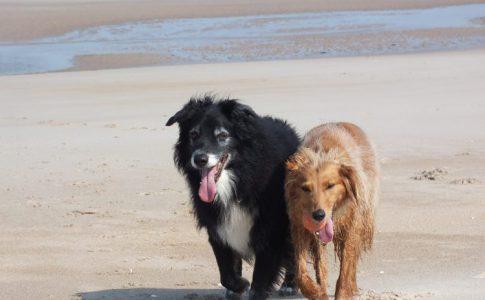 Vacaciones en la playa con mi perro
