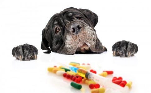 Dar ibuprofeno al perro