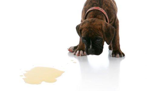 Problemas de esfínteres en perros esterilizados