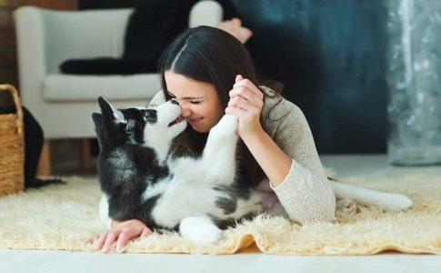 Juegos de perros en casa
