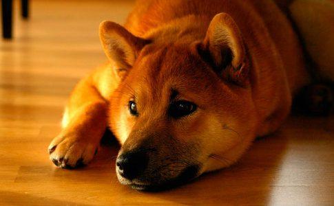 ¿Puede tener vómitos una perra estando embarazada?