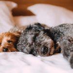 ¿Puede un perro tomar medicamentos de humano si tiene gripe?
