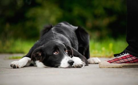 Aprender el lenguaje corporal de los perros