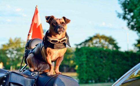 Viajar en moto con el perro
