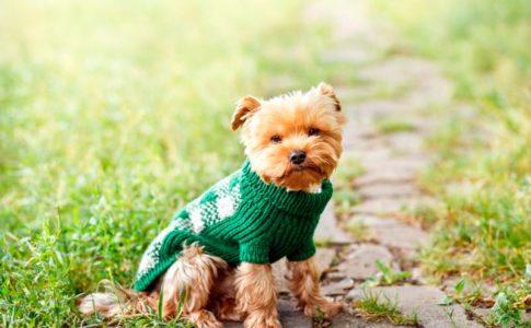 Todo lo que los perros no soportan de los humanos