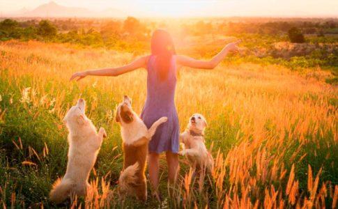 Las mentiras más extendidas sobre los perros
