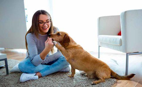 Por qué mi perro huele mis zonas íntimas