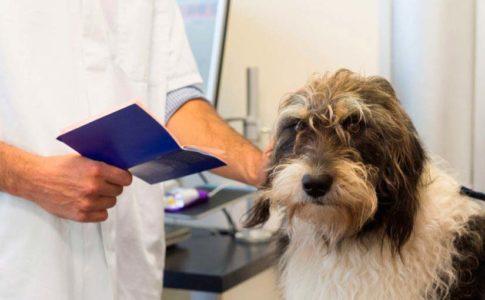 Los perros sin raza tienen mayor complexión