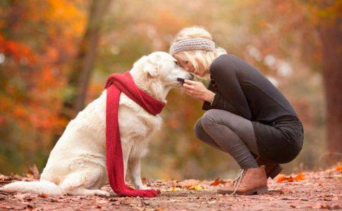 ¿Los perros pueden enamorarse de las personas?