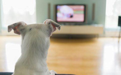¿Los perros pueden ver la tele?