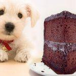 ¿Se puede quedar ciego un perro por el azúcar?