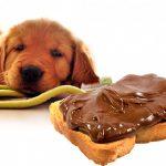 ¿Se puede quedar ciego un perro comiendo chocolate?