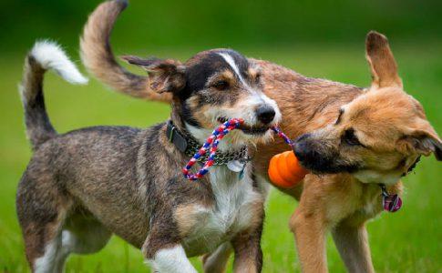 ¿Son posesivos los perros?