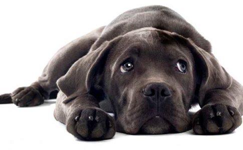 ¿Los perros tienen recuerdos?