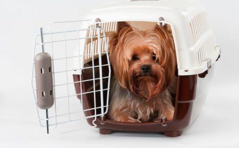 Requisitos para viajar con un perro en avión