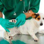 Técnicas de castración canina