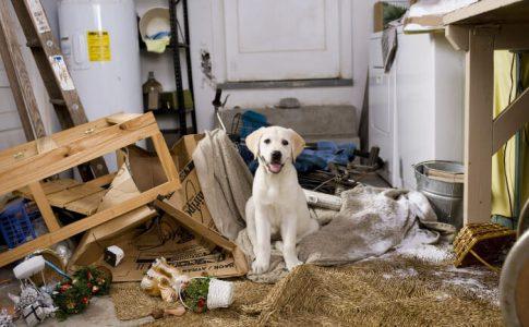 ¿Cómo adiestrar a un perro que rompe todo?