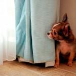 mi perro tiene miedo a las tormentas