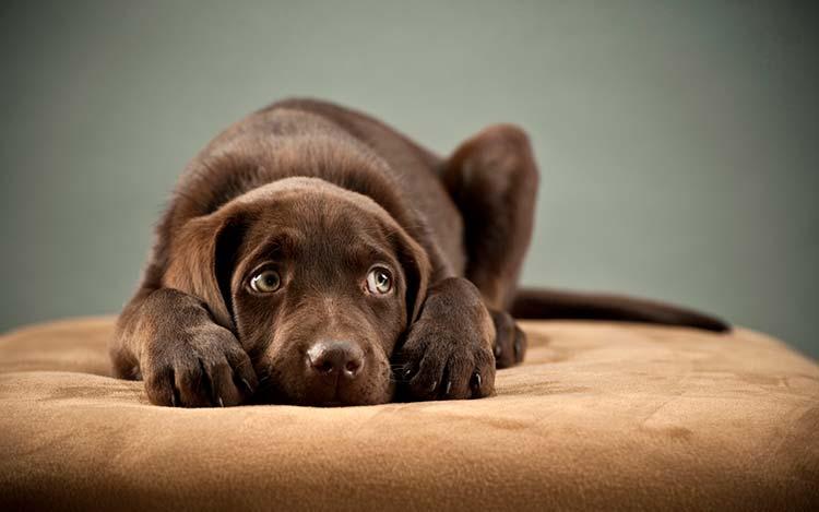 como quitarle el miedo a un perro