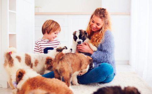 Razones por las que adoptar a un perro