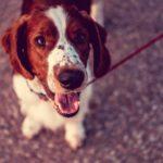 Motivos razón seca en perros