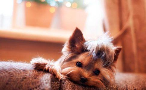 Cuál es el nombre para perros más popular
