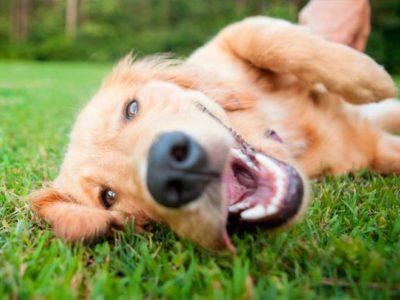 Por qué a mi cachorro le huele el aliento