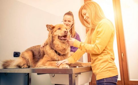 Cómo es la operación para castrar a un perro