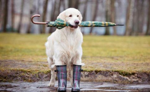 Cómo pasear al perro bajo la lluvia
