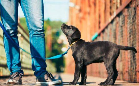 Cómo salir a pasear con tu perro y no morir en el intento