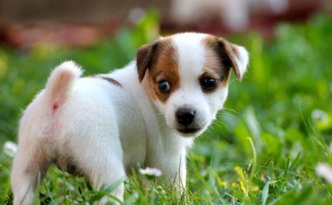 Pasear cachorro sin vacunar