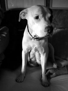 periodo de gestación de una perra
