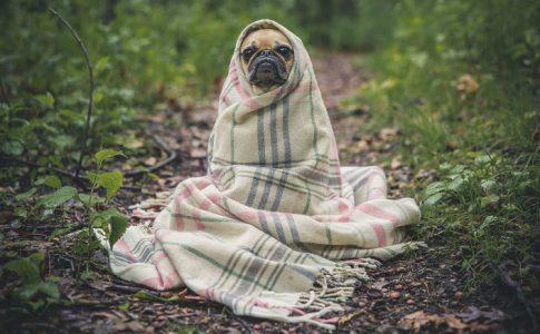 perrito-abandonado