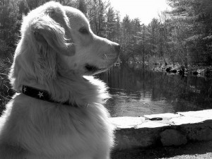 ¿Qué significa el cariño para un perro?