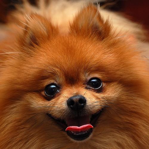 La higiene del perro | Mundo Perro
