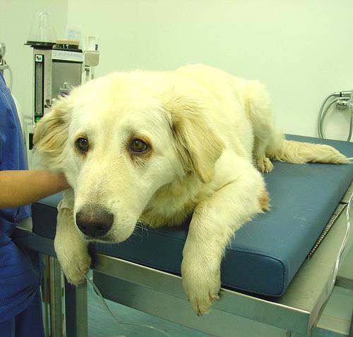 Visita al peluquero o al veterinario