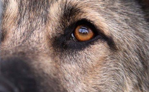Cómo tratar a un perro que tiene depresión y es adoptado
